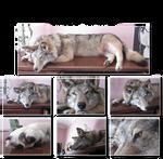 Jynx the Wolf