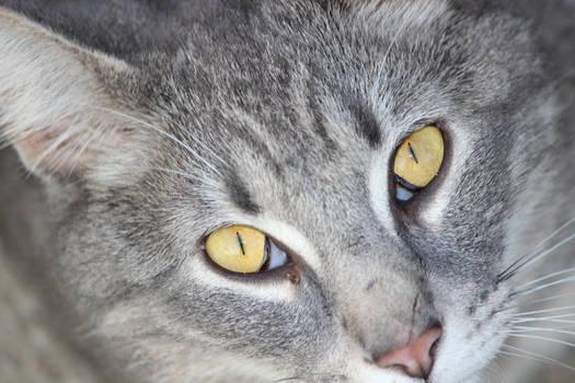 Close-up of Dorian
