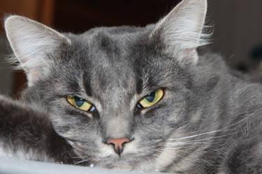 Maxie - Close-up