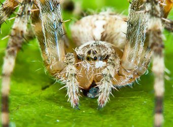 Spider by philosophy-dude