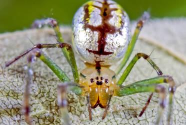 Spider -I've got Shiny Balls by philosophy-dude