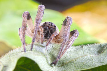 Spider with Jaws of Death by philosophy-dude