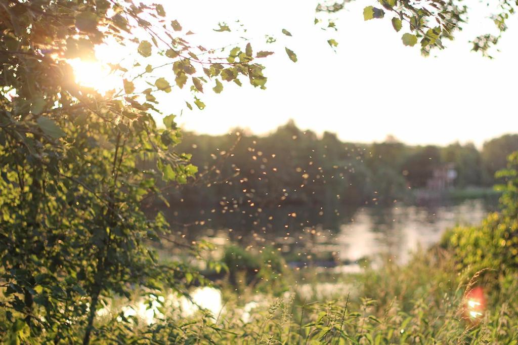 Summertime by Jonarts