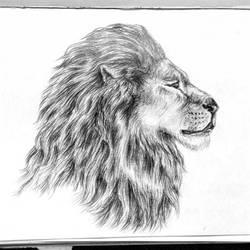 Lion by OyakoNamida