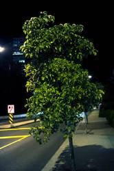 Urban Tree, at Night