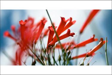 Scarlet Exhalation by arhcamt