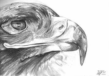 The Eagle of Glencoe by MagicalFingers