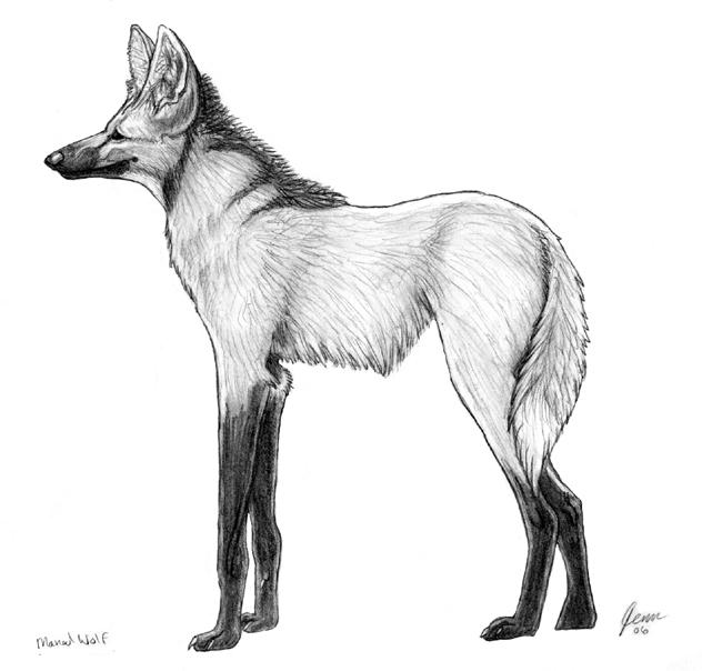 Maned Wolf By SageKorppi On DeviantArt