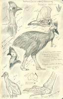 Cassowary Study by SageKorppi