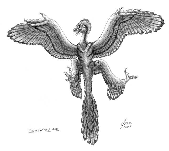 microraptor coloring pages - photo#12