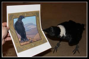 Raven Approved by SageKorppi