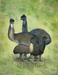 Extinct Emus