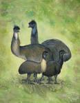 Extinct Emus