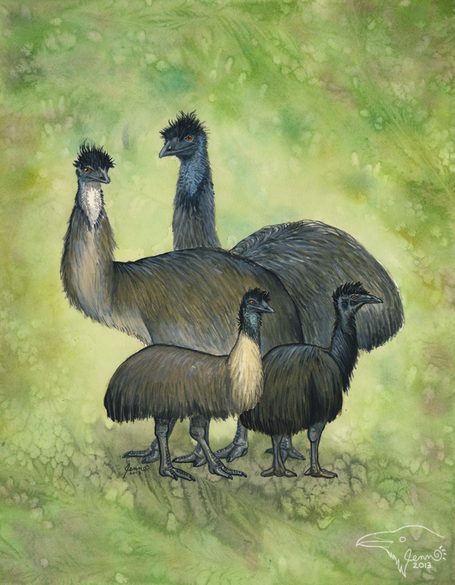 Extinct Emus by SageKorppi