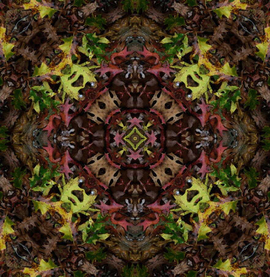 Leaves Fall 09 Ksd 1