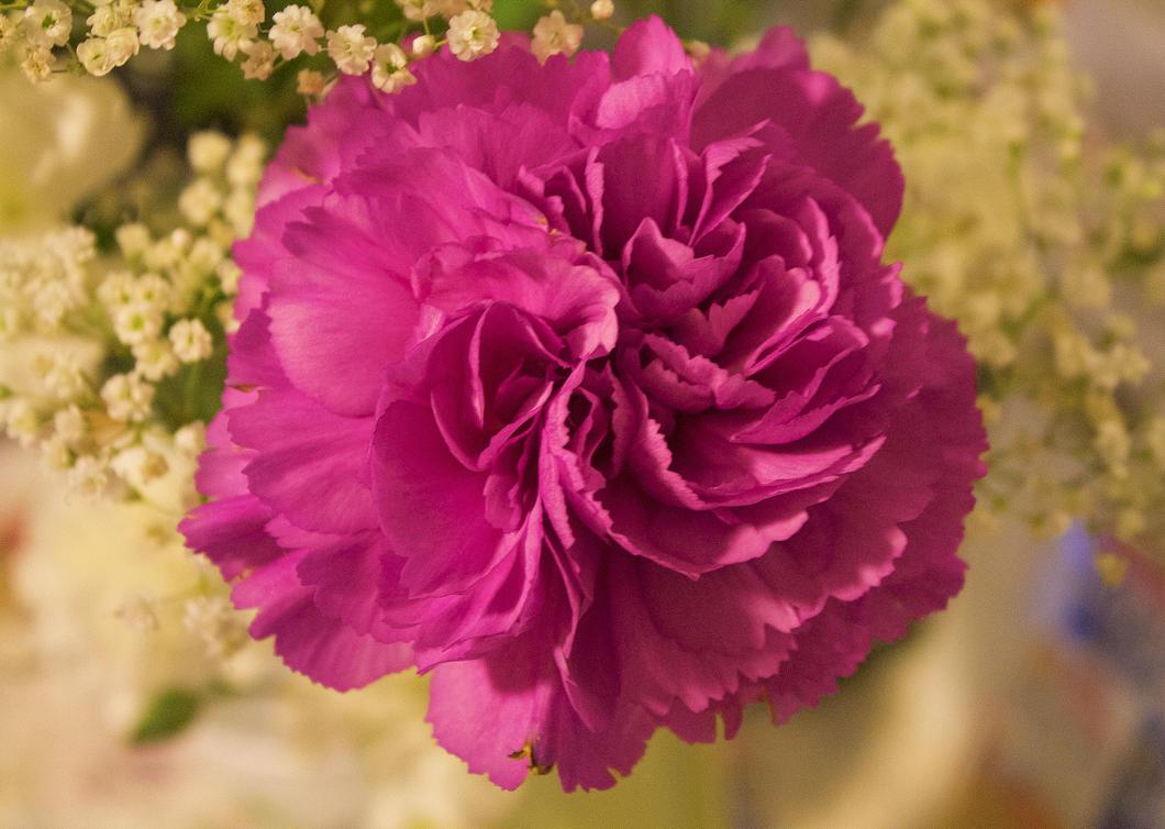 pink flower 9-19-14 by ChasMandala