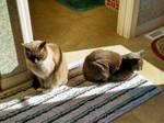 cats by ChasMandala