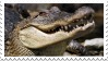 Alligator stamp by Jontukka