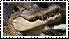 Alligator stamp by Jontukka