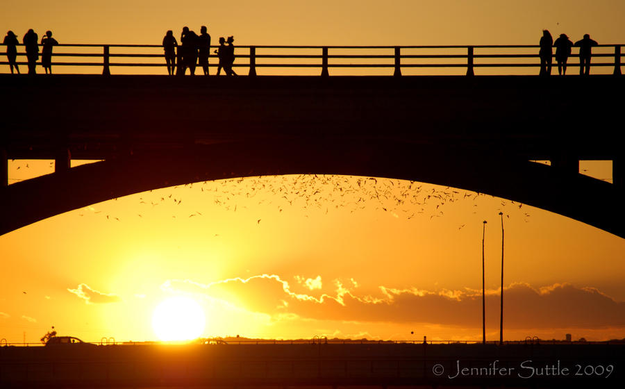 Bat Sunset by jayshree