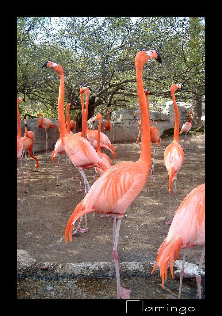 Flamingo by jayshree
