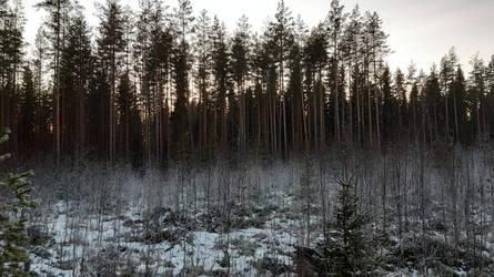 Treescape in winter