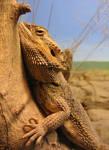Lizard by Tokirin