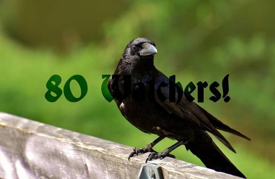 80 Watchers!