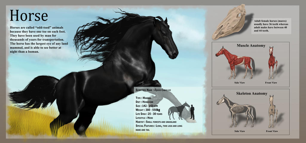 Horse Anatomy Assignment by JasonCSY on DeviantArt