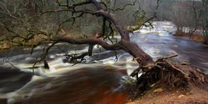 Fallen tree by RomGams