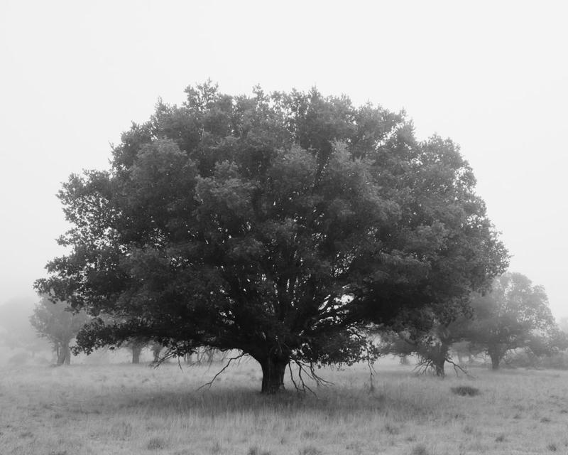 Black and white tree i by xelement