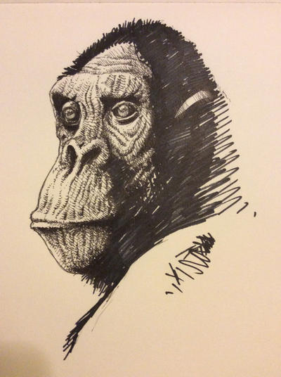 Monkey by JeremyWDunn