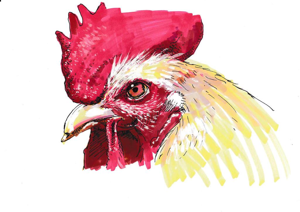 Cock by JeremyWDunn