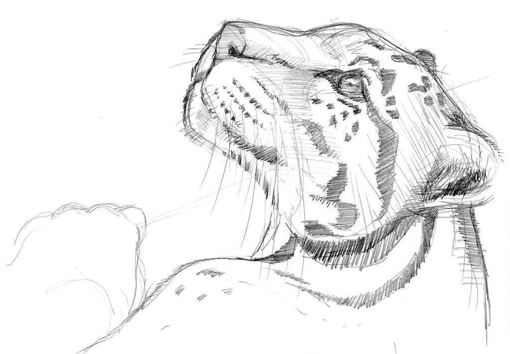 Leopard by JeremyWDunn