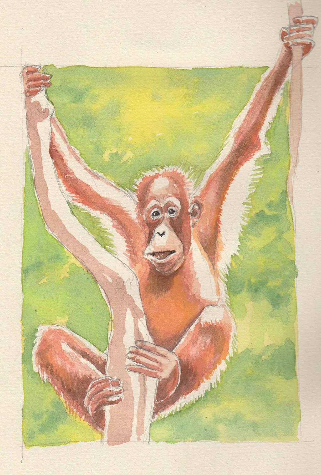 Orangutan watercolour by JeremyWDunn