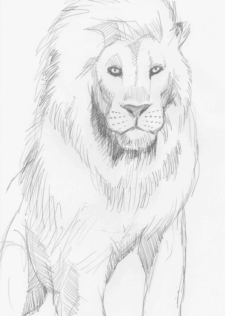 Lion by JeremyWDunn
