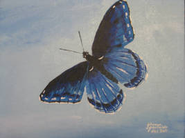 Blue butterfly by CurrentlyLoading