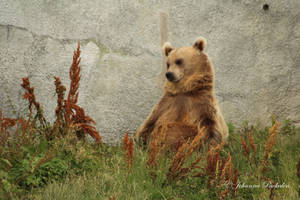 Just a bear chillin' by CurrentlyLoading