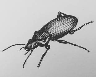 Bug by CurrentlyLoading