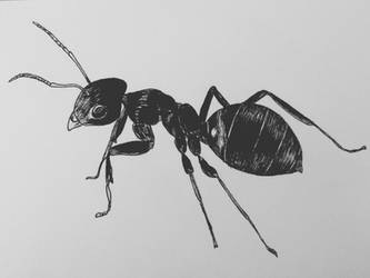 Ant by CurrentlyLoading