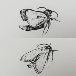 Moth by CurrentlyLoading