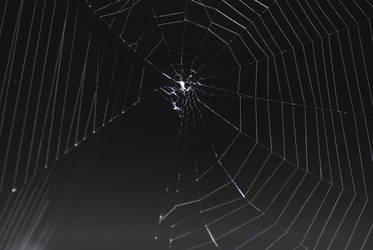 Abandoned Web