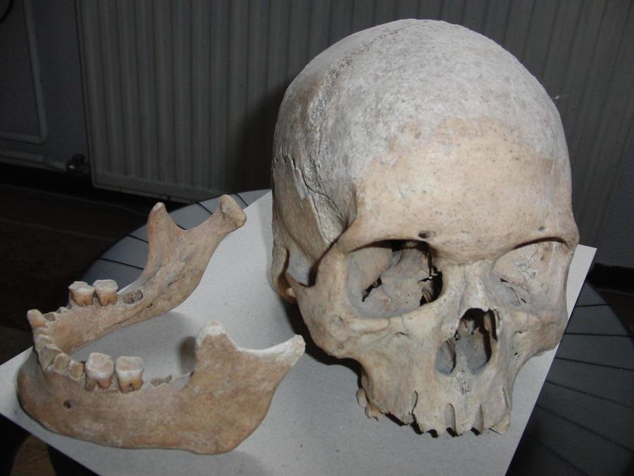 Human Head Reference