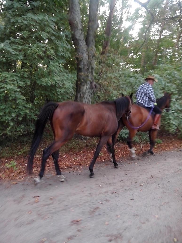 horsepower by TeddyXG