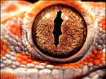 Tokay Gecko Eye