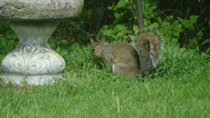 the gray squrrial i saw just now :3