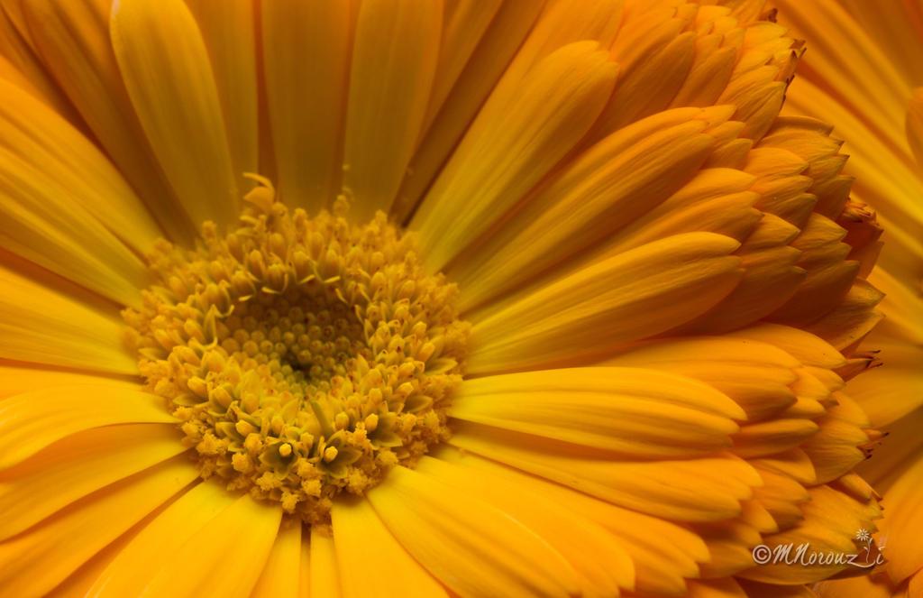 Flower by mnoruzi