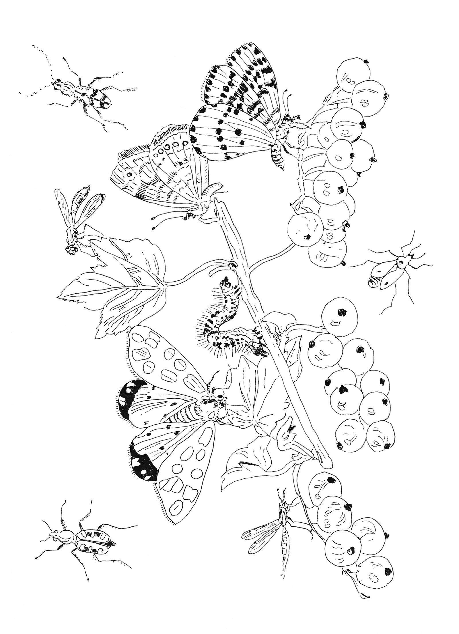 Pippa Rossi Lost Garden Adult Coloring Book Insect By