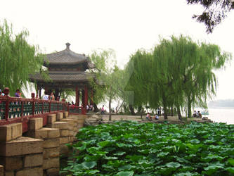 Leafy Pond in China