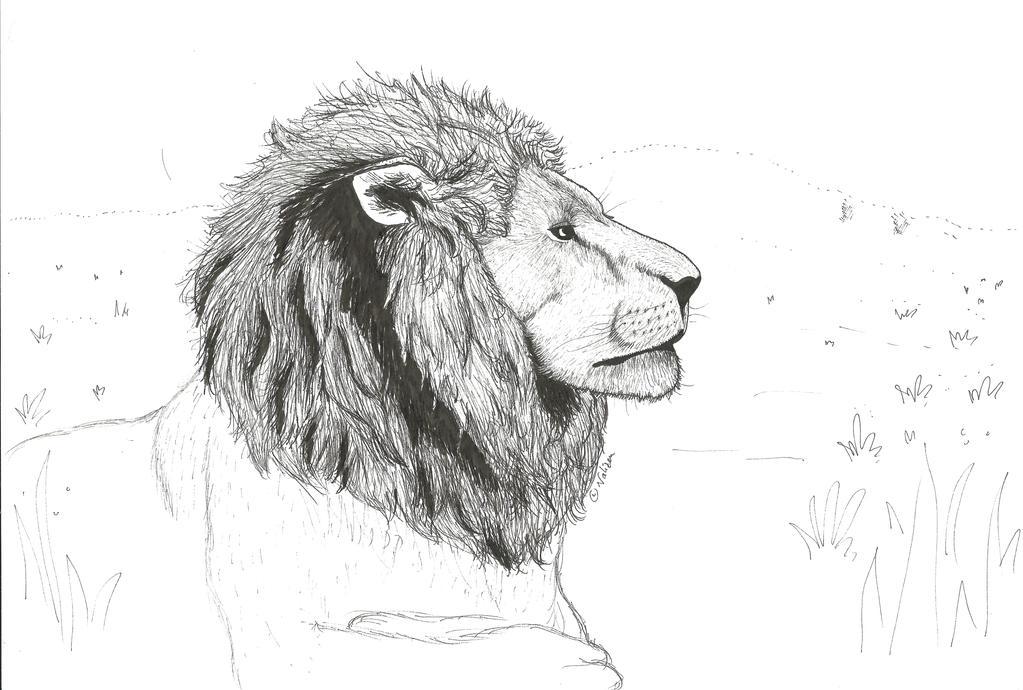 Lion study by NaliZen